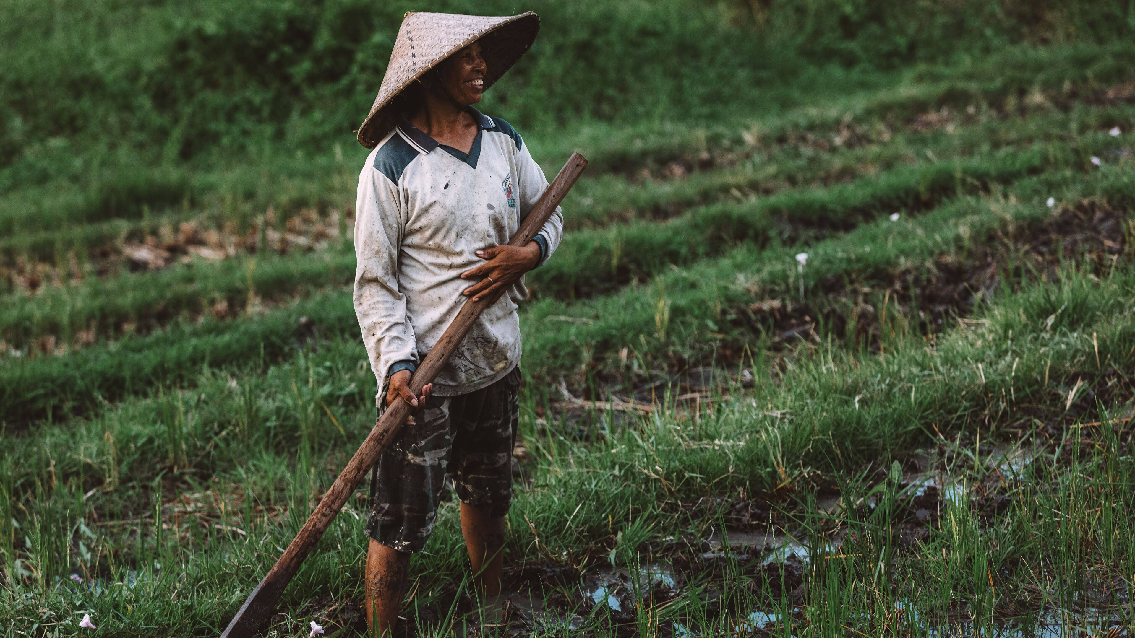 Happy Farmer Tending To His Rice Field Bali Indonesia 4k
