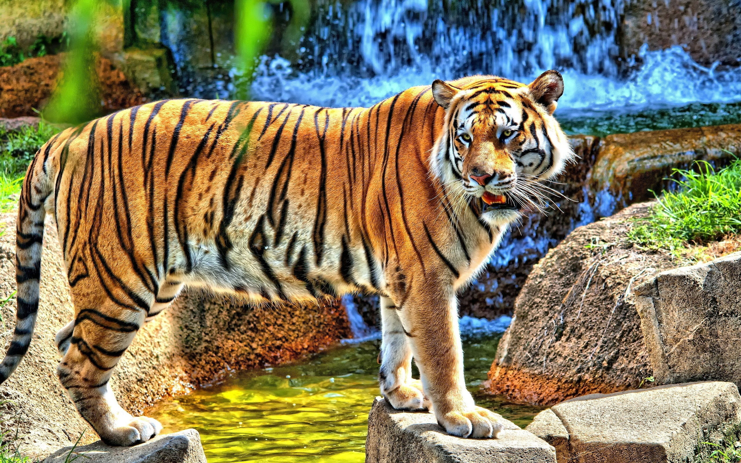 Tiger 4k Wallpapers For Your Desktop Or Mobile Screen Free And Easy To Download
