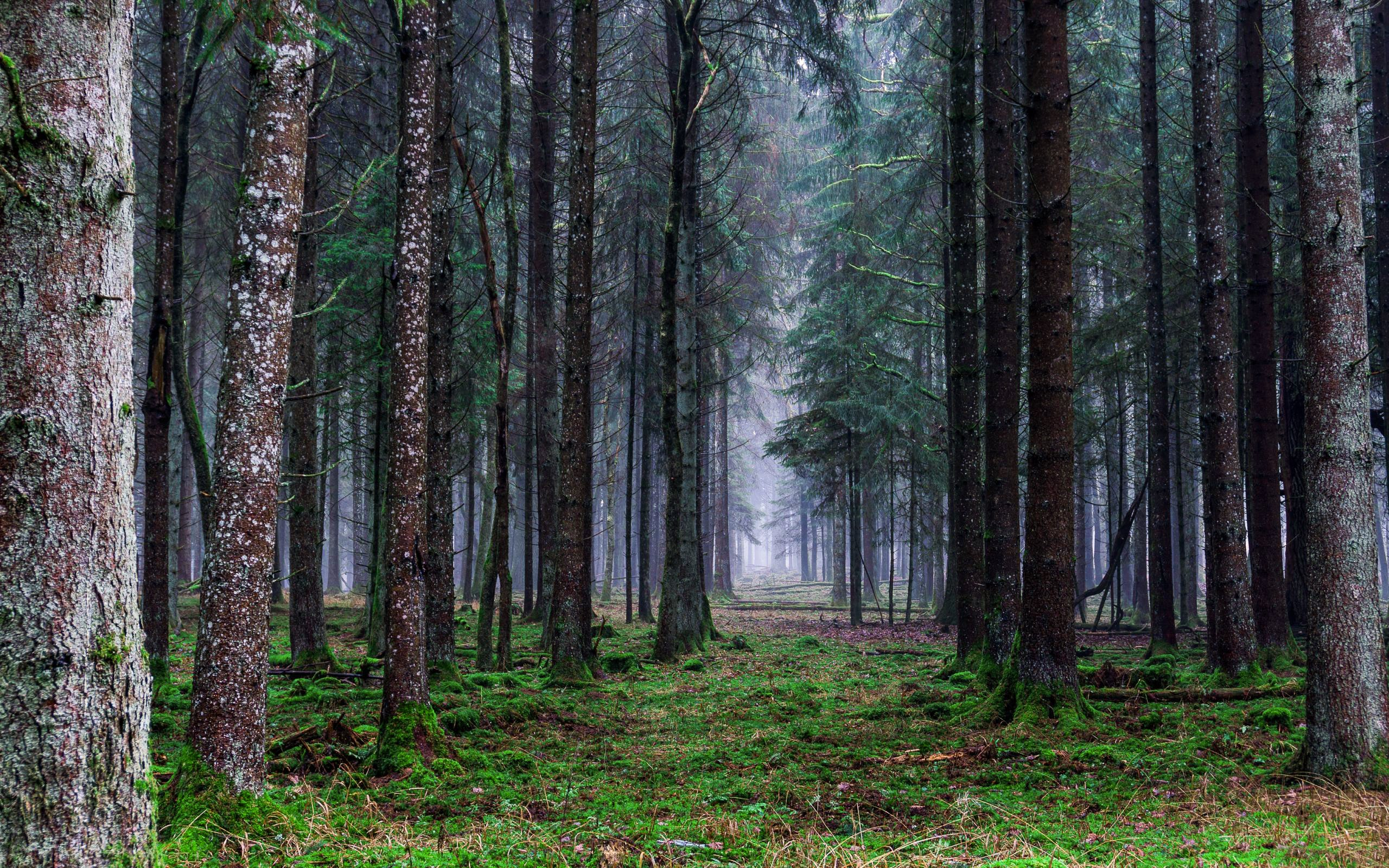 Forest 4k Wallpapers For Your Desktop Or Mobile Screen Free