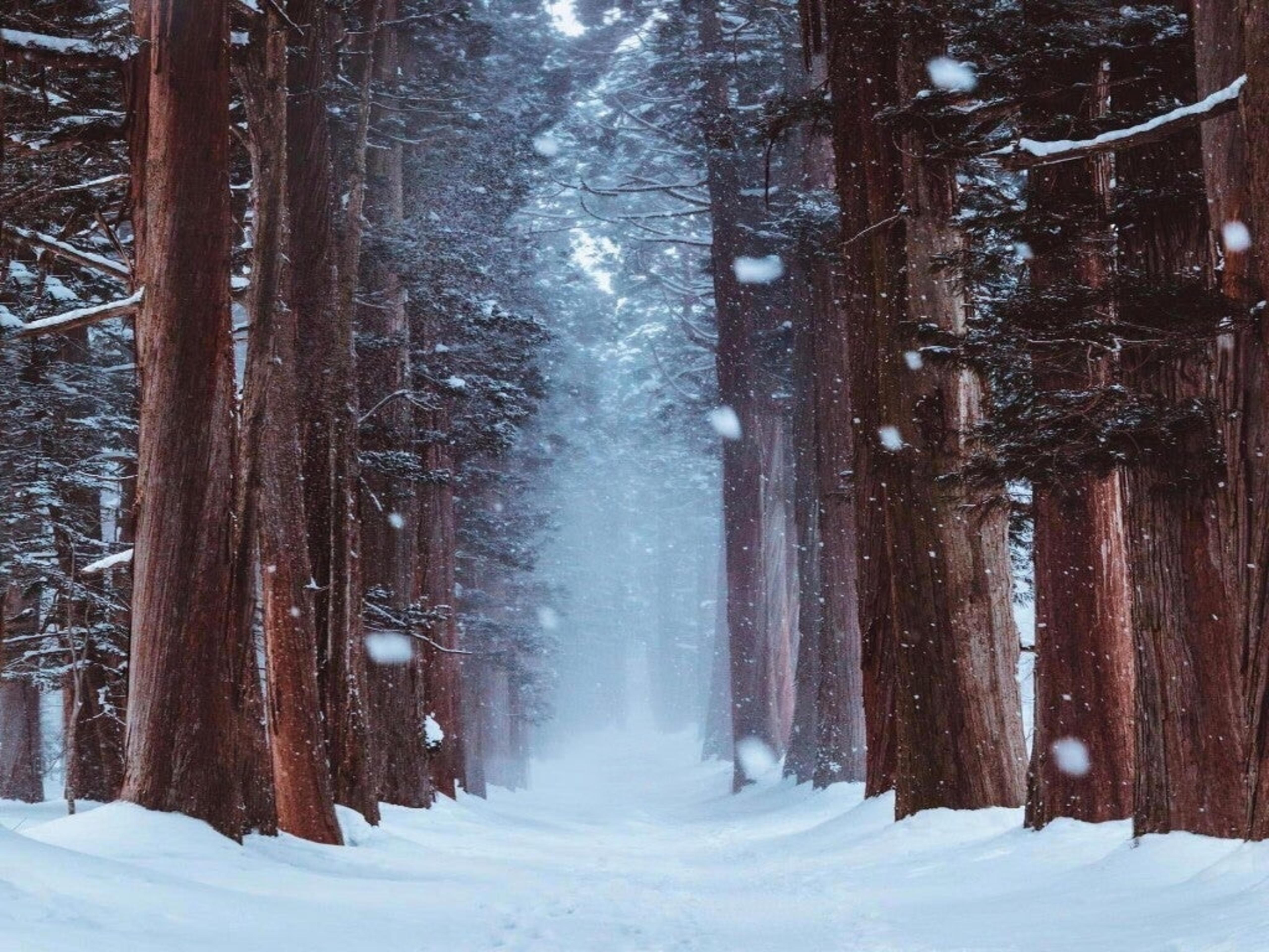 Snowy 4k Wallpapers For Your Desktop Or Mobile Screen Free