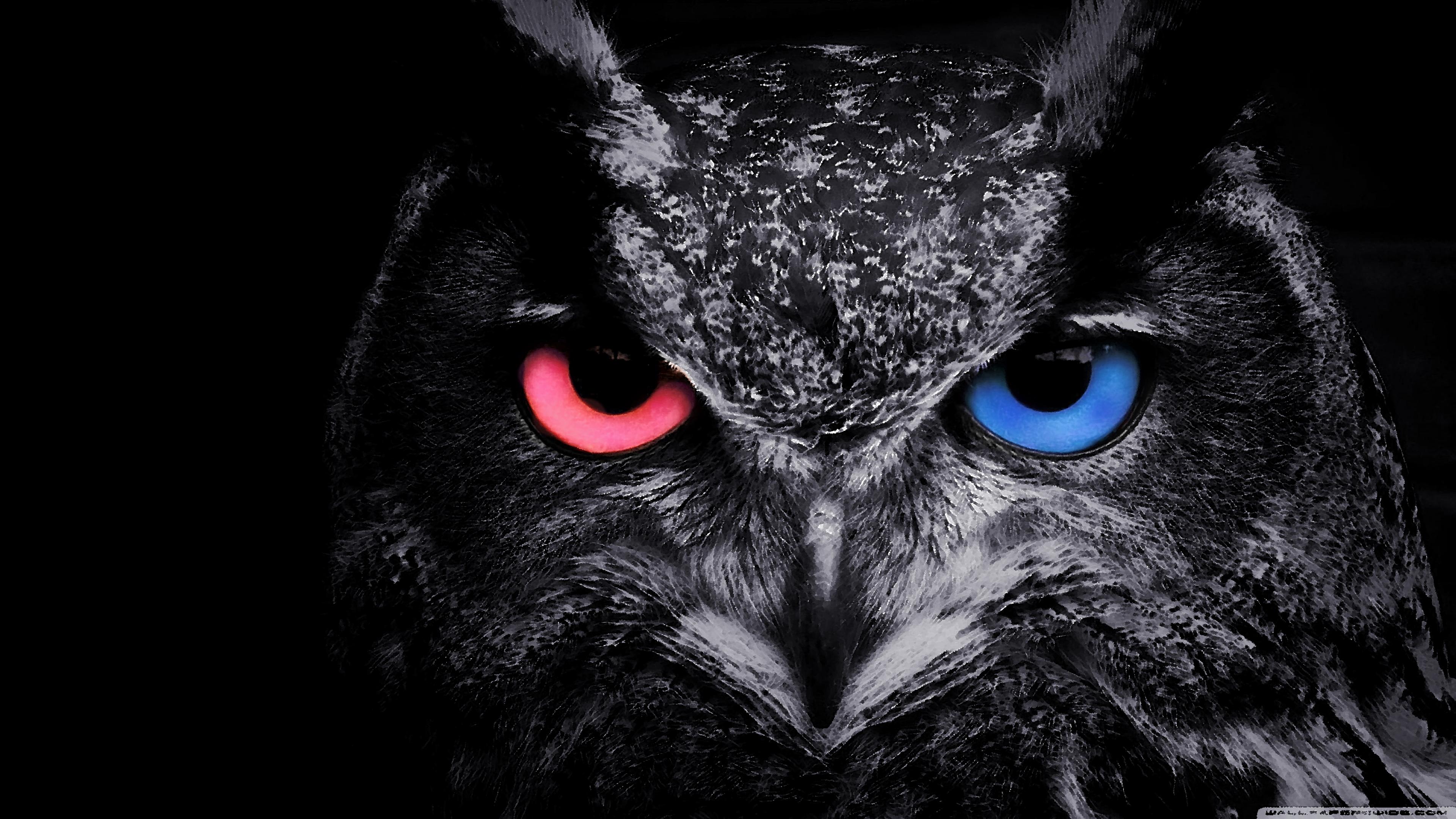 Owl 4k Wallpaper