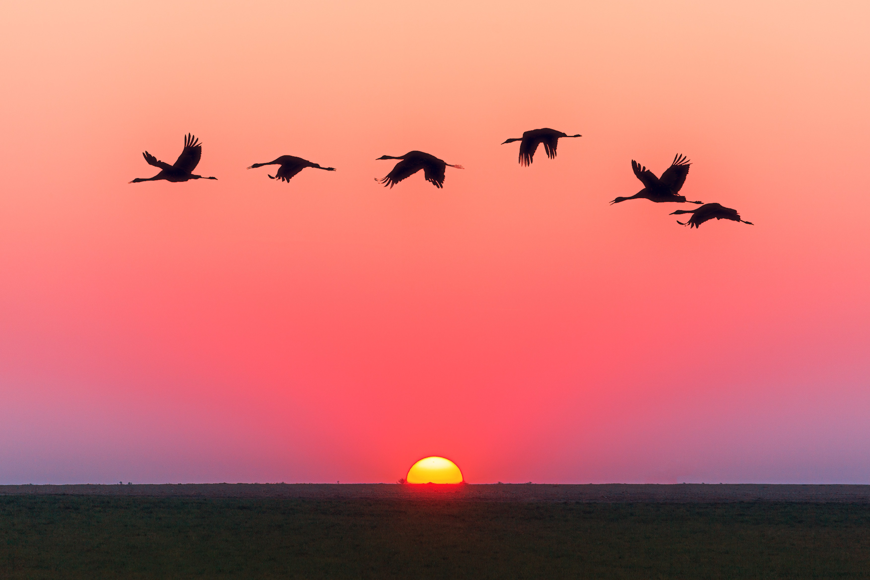 Birds 4k Wallpapers For Your Desktop Or Mobile Screen Free And Easy To Download