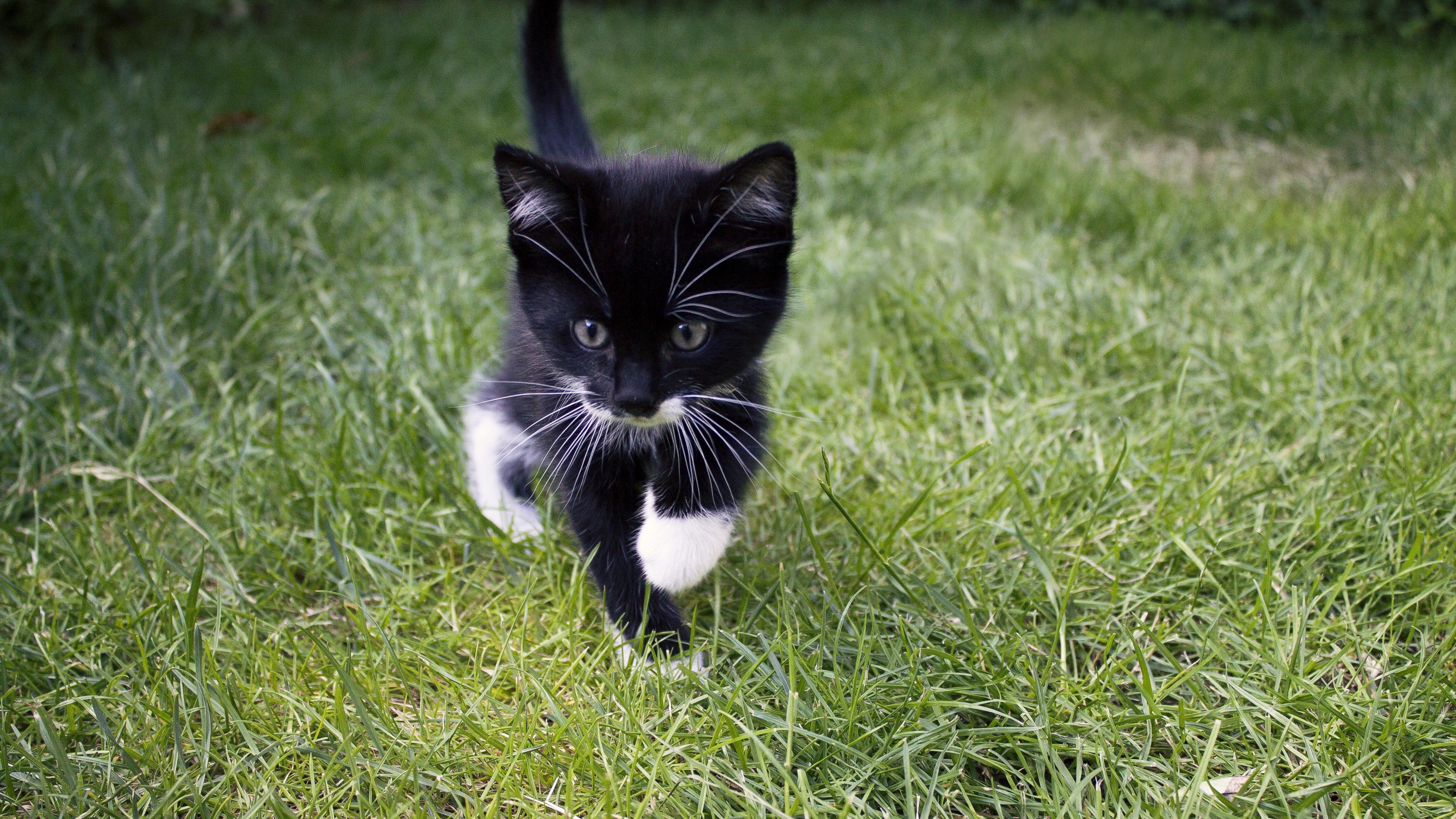 Kitten Cat 4K wallpaper