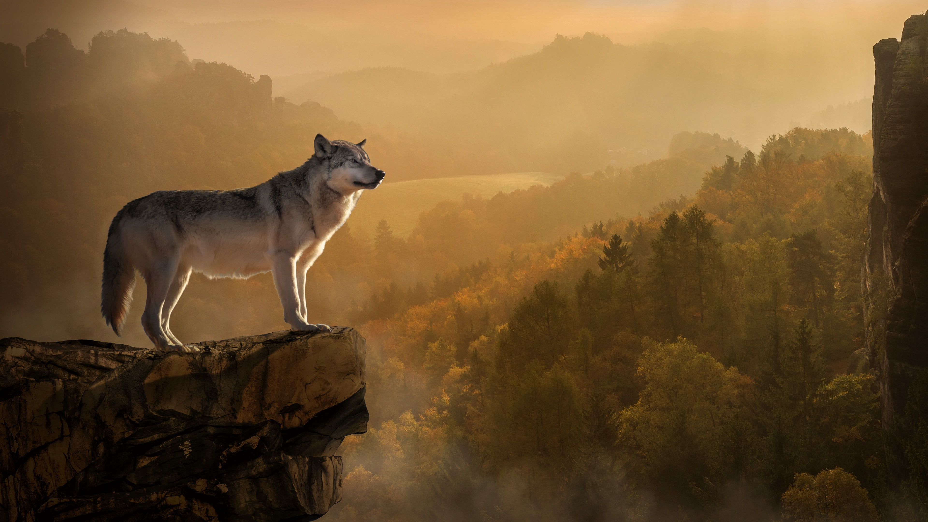 wolf rock wallpaper