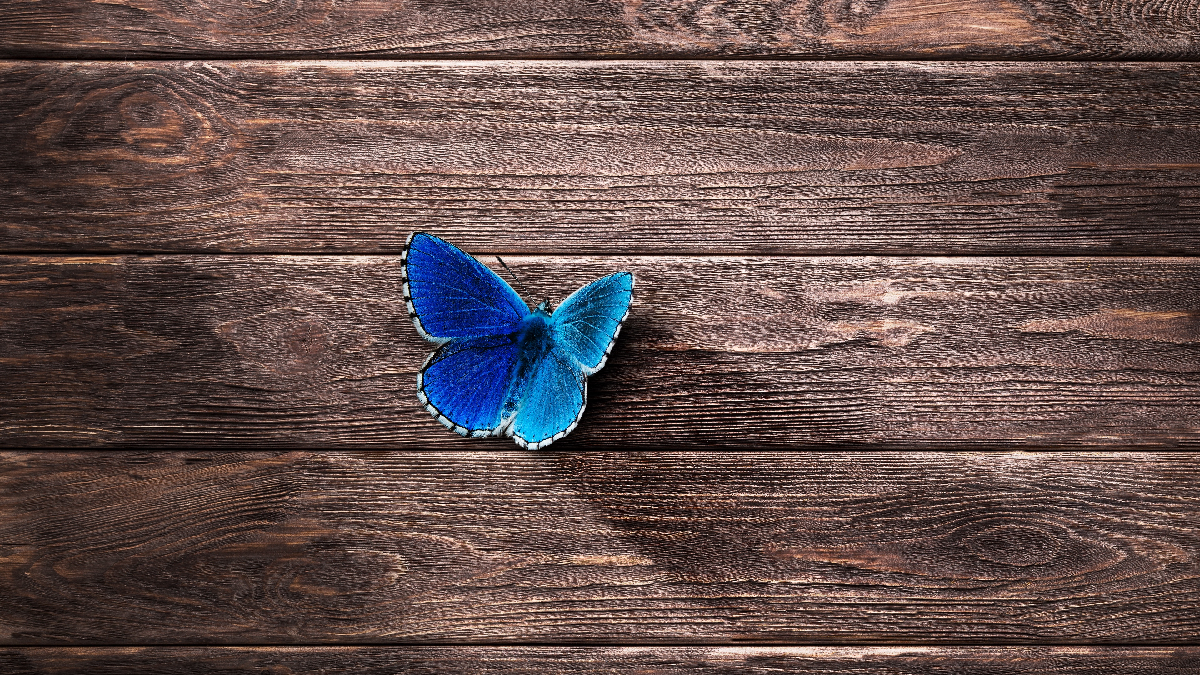 Butterfly 4k Wallpapers For Your Desktop Or Mobile Screen Free And Easy To Download