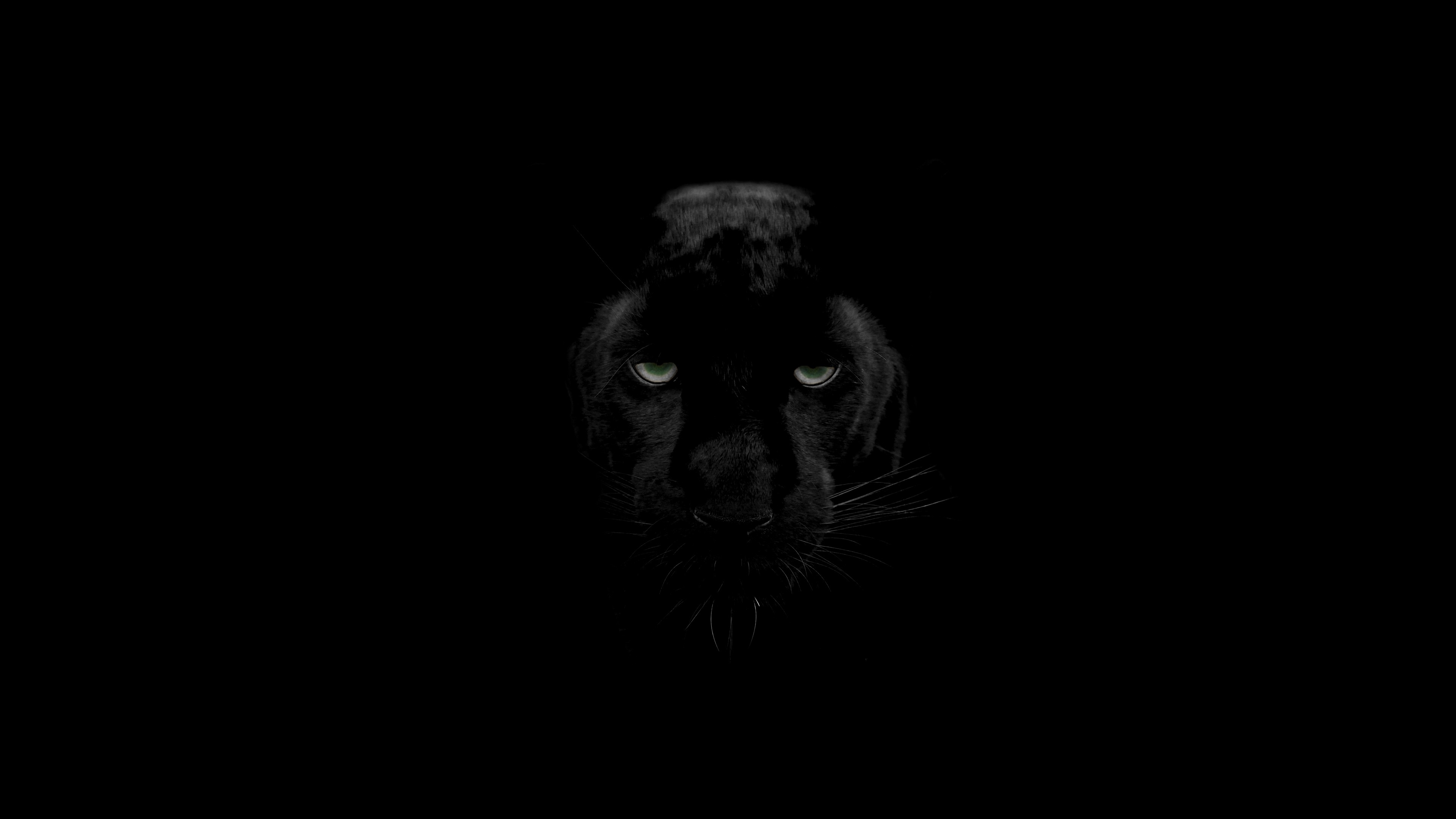 Image result for predator panther