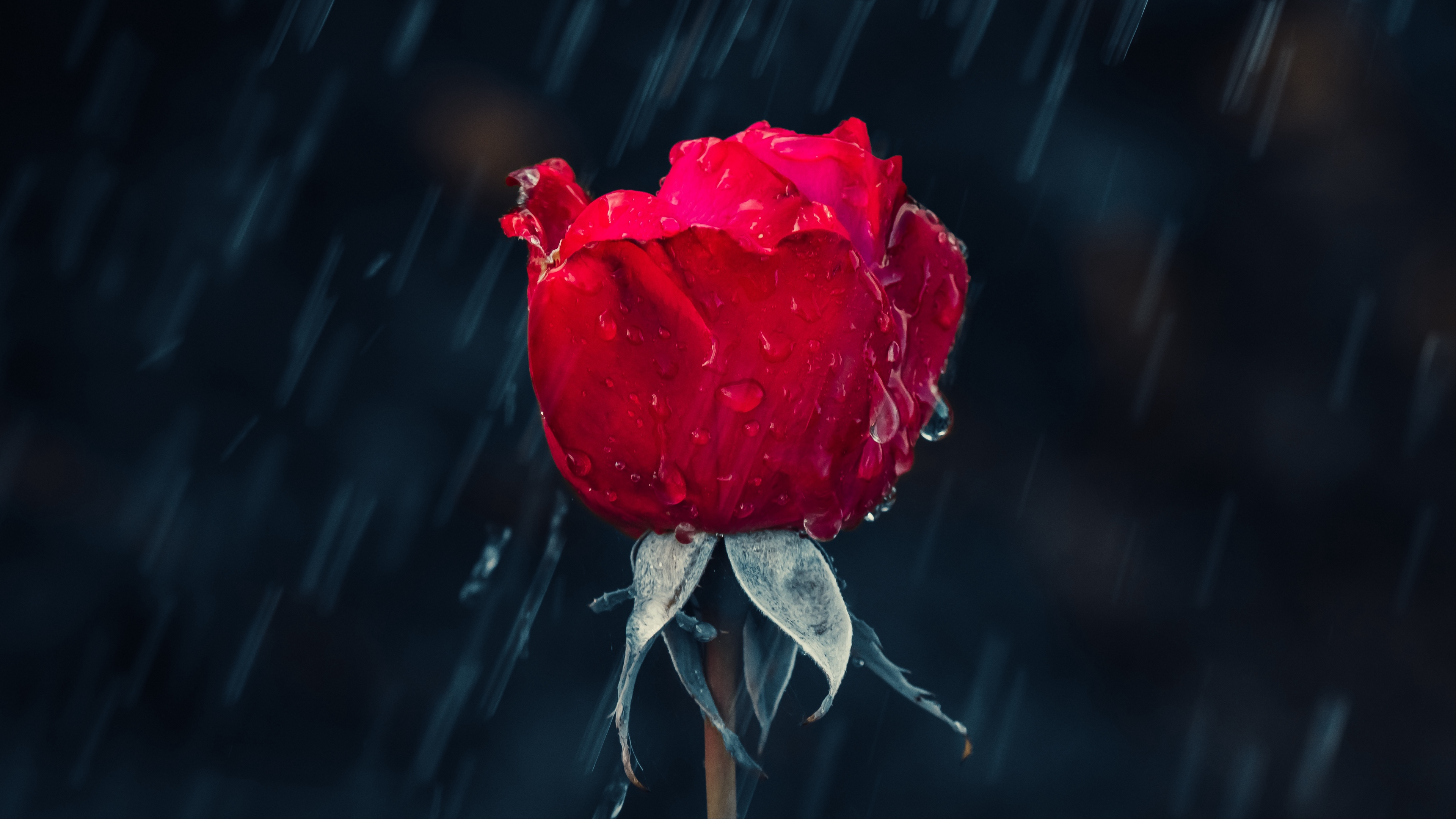 Rain 4k Wallpapers For Your Desktop Or Mobile Screen Free And Easy To Download