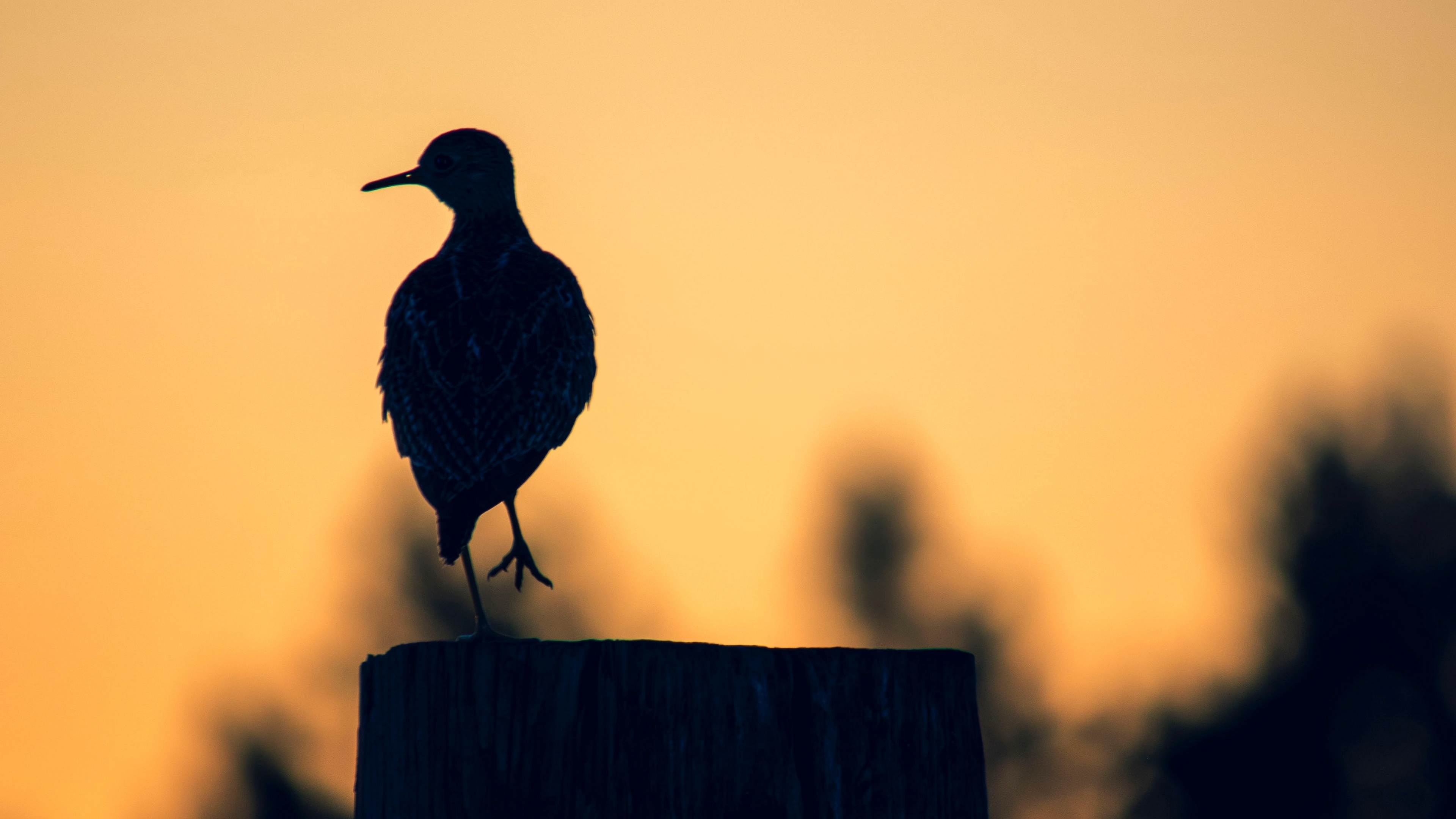 Bird 4k Wallpapers For Your Desktop Or Mobile Screen Free And Easy To Download