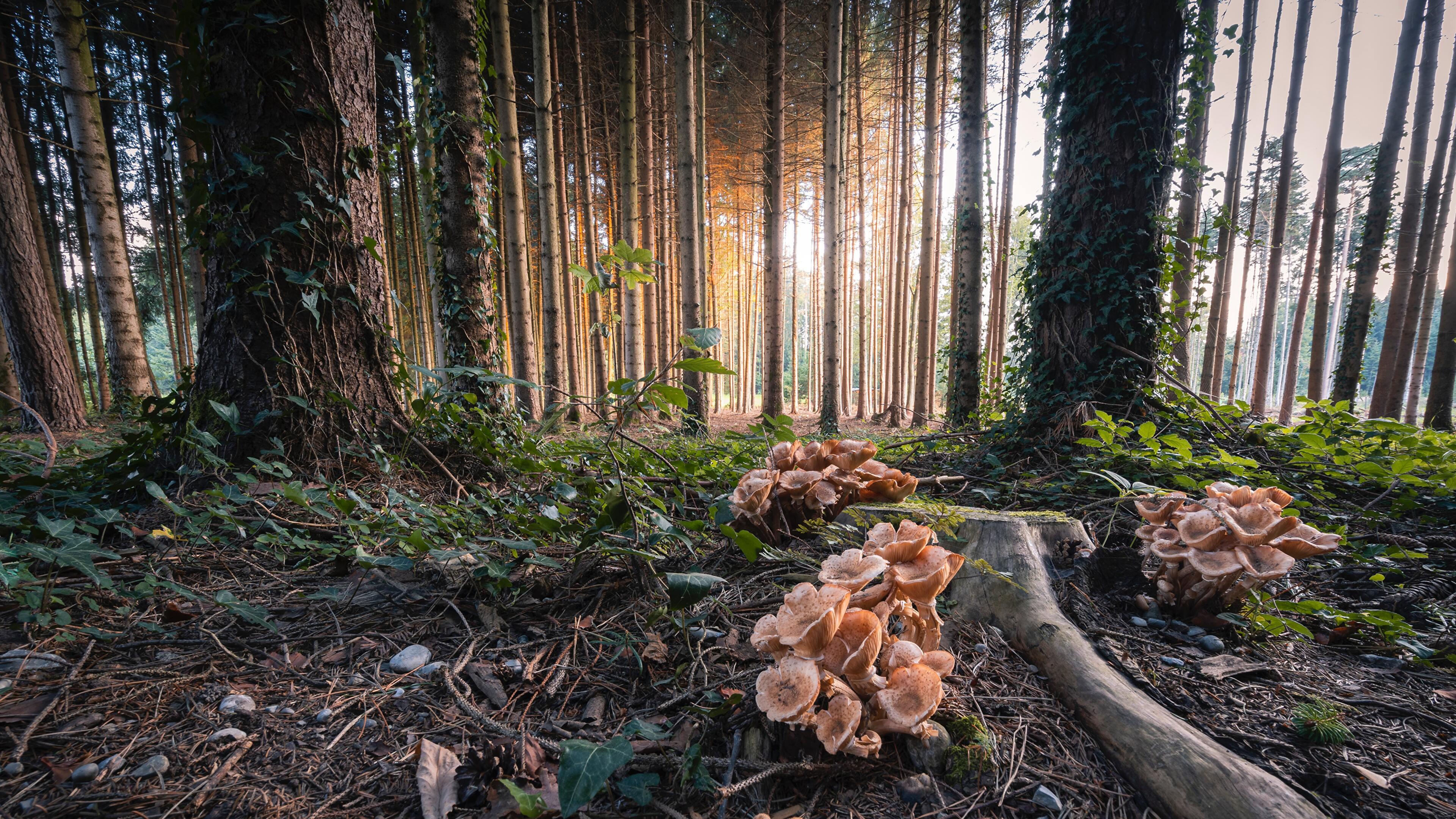 mushrooms in the forest frauenfeld switzerland wallpaper
