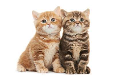2 Kittens wallpaper