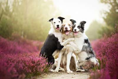 3 Cute Dogs wallpaper
