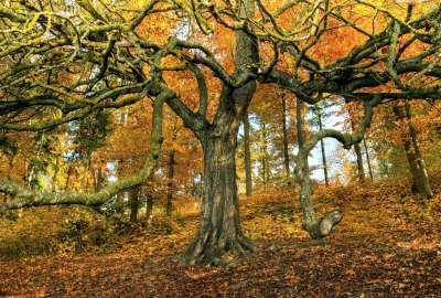 Amazing Tree in Autumn Season wallpaper