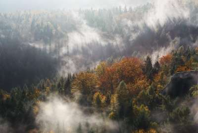 Autumn Forest in Fog wallpaper