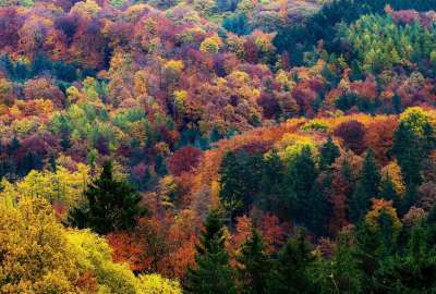 Autumn Forest Trees Seen From Top wallpaper