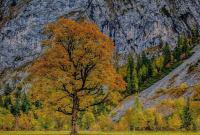 Autumn Tree Next to Mountains wallpaper