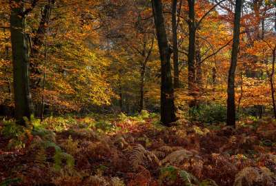 Autumn Trees Landscape 790 wallpaper