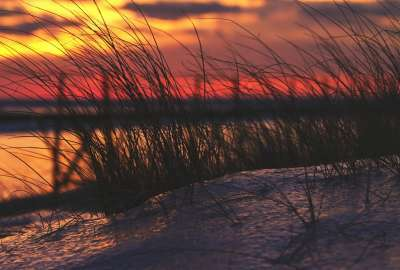 Beach Grass Against the Winter Sunset on Lake Michigan wallpaper