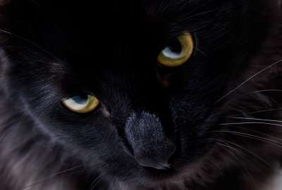 Black Kitty Closeup wallpaper