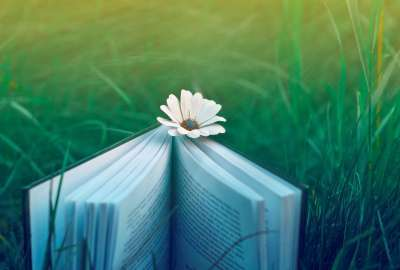 Book in Grass wallpaper