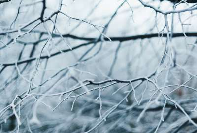 Branches of Trees Covered With Frost wallpaper