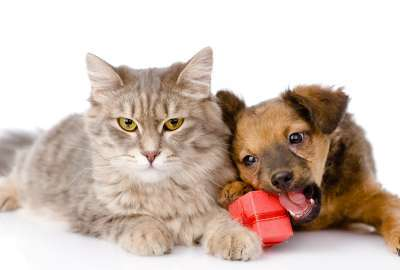 Cute Cat And Dog 1561 wallpaper