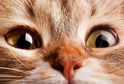 Cat Closeup wallpaper