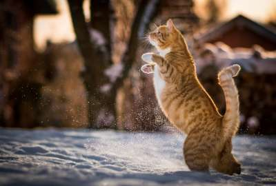Cat In Snow 1407 wallpaper
