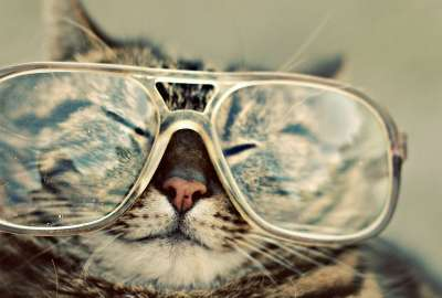 Cat With Glasses 1182 wallpaper