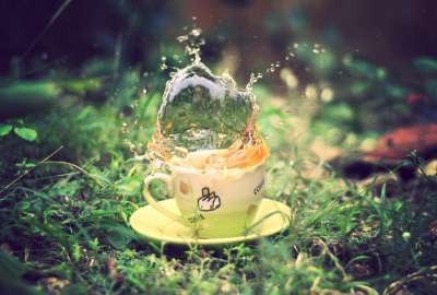 Coffee Cup With Water in the Forest wallpaper