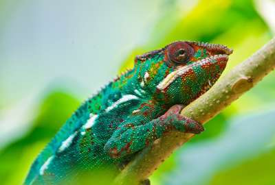 Colorful Chameleon 4K wallpaper