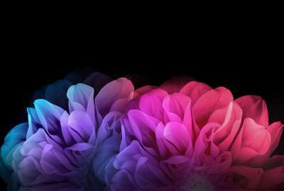 Colorful Flowers Dark Background wallpaper