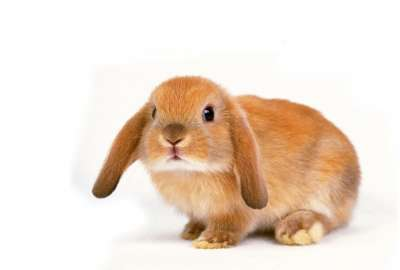 Cute Bunny Posing wallpaper