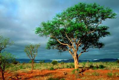 Desert Tree Landscape wallpaper