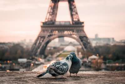 Doves Couple Eiffel Tower wallpaper