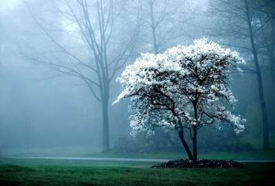 Early Foggy Morning in the Park wallpaper