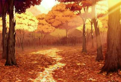 Fall Forest 2504 wallpaper