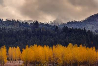 Fall in the Pacific Northwest - Lorane Oregon wallpaper
