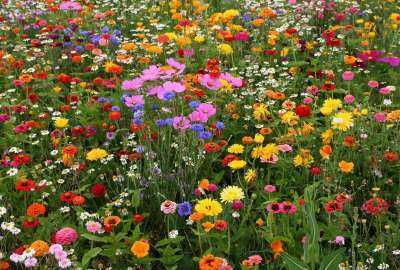 Flower Multicolored Field wallpaper