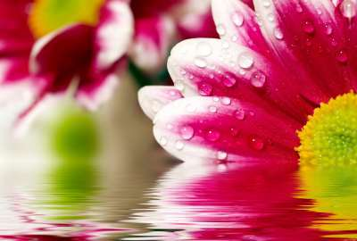 Flower Reflections wallpaper
