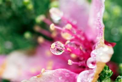 Flower Tears wallpaper