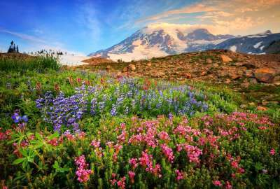 Flowers With Mountain Landscape wallpaper