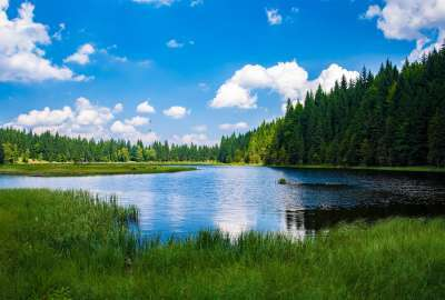 Forest Around the Lake Bavaria wallpaper