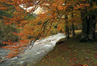 Forest Autumn River wallpaper
