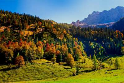 Forest Landscape With Mountains wallpaper