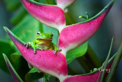 Frog on Pink Flower wallpaper