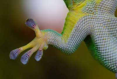 Gecko Hand wallpaper