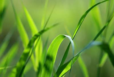Grass Closeup 1767 wallpaper
