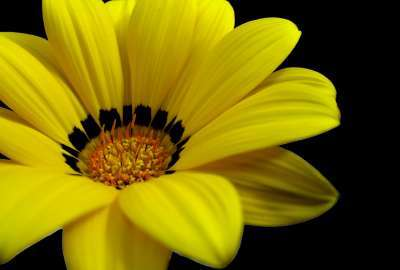Great Yellow Flower wallpaper