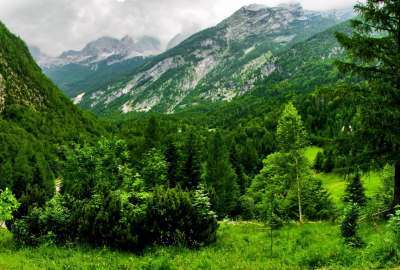 Green Forest Next to Beautiful Mountains wallpaper