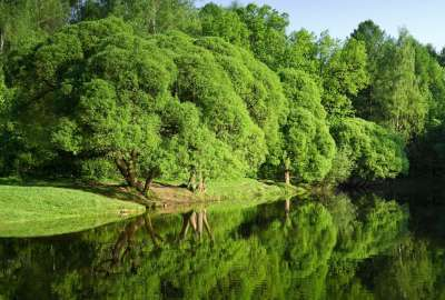 Green Landscape River 1098 wallpaper